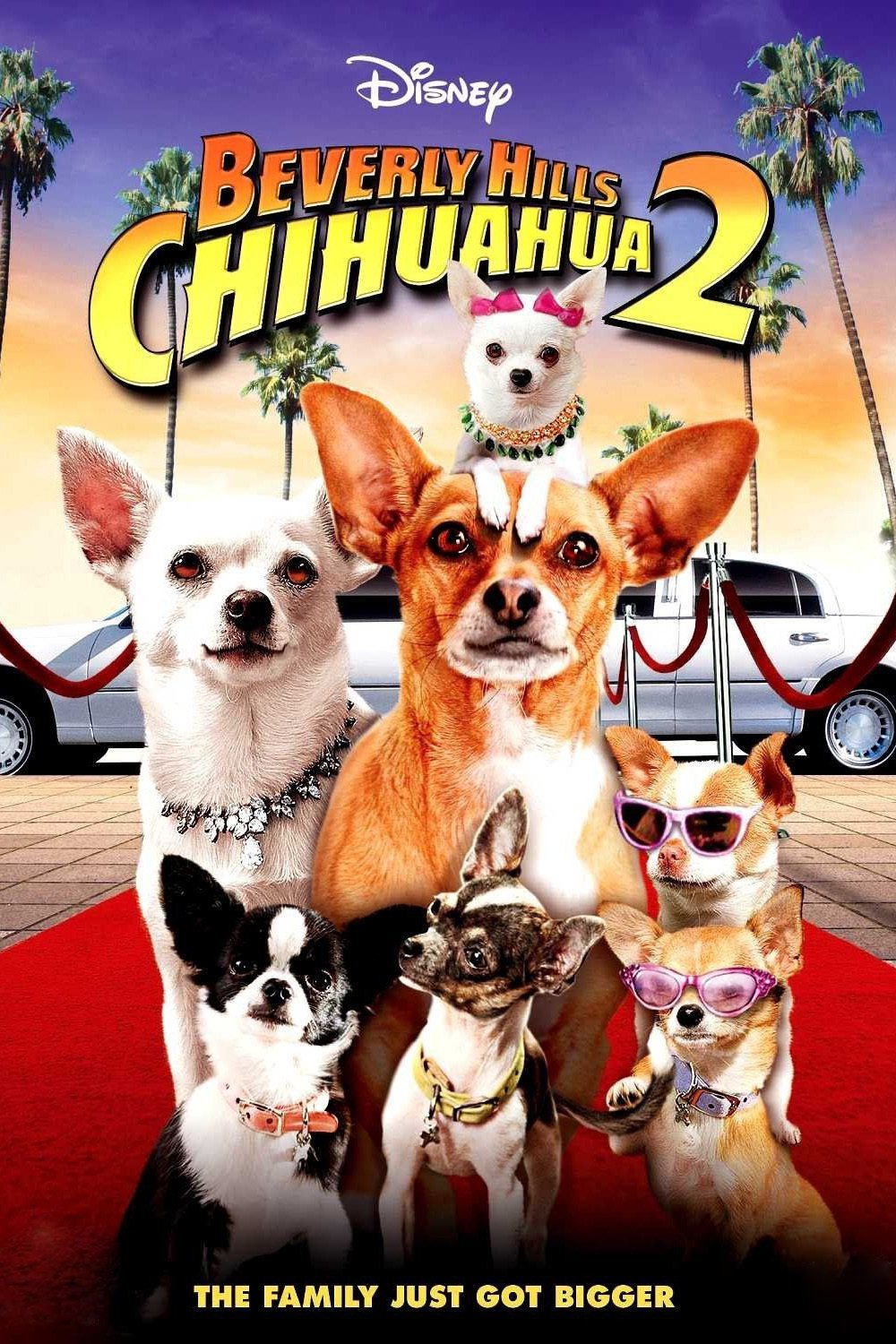 Beverly Hills Chihuahua, 2008